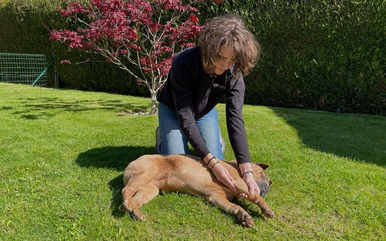 massage chien