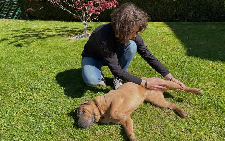 reboutologie canine